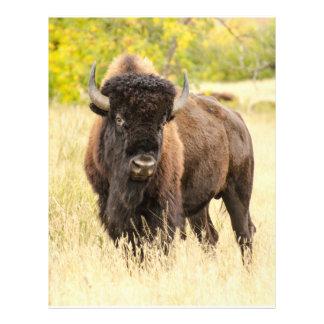 Wild Buffalo in a Field Flyer