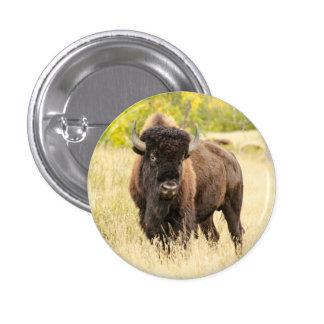 Wild Buffalo in a Field Pinback Button