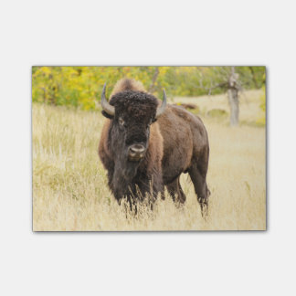 Wild Buffalo in a Field Post-it Notes