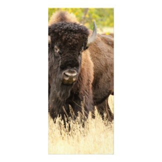 Wild Buffalo in a Field Rack Card