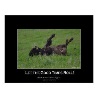 Wild Bufffalo Rolling in Grass Wildlife Photo Poster