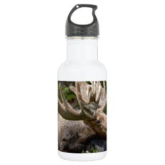 Wild Bull Moose Stainless Steel Water Bottle