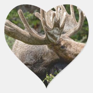 Wild Bull Moose Stickers