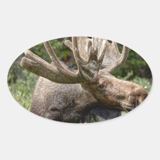 Wild Bull Moose Oval Sticker
