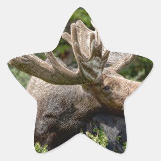 Wild Bull Moose Star Sticker