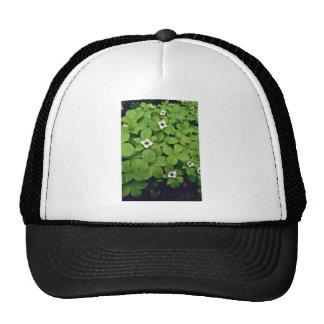 Wild Bunchberry flowers Hat