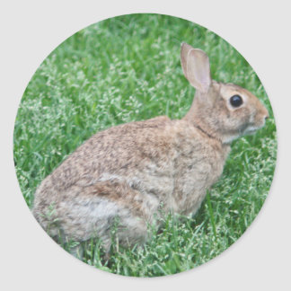 Wild bunny photo classic round sticker