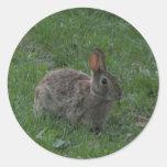 Wild Bunny Rabbit Classic Round Sticker