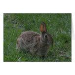 Wild Bunny Rabbit Greeting Card