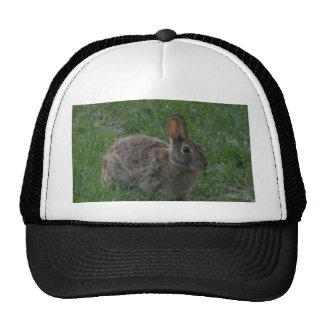 Wild Bunny Rabbit Hat