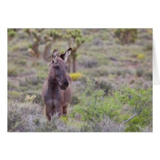 Wild Burro in Calico Basin, Nevada Card