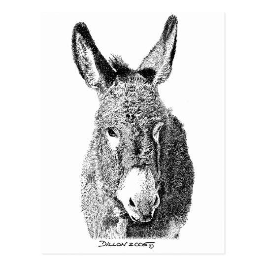 Wild Burro Postcard
