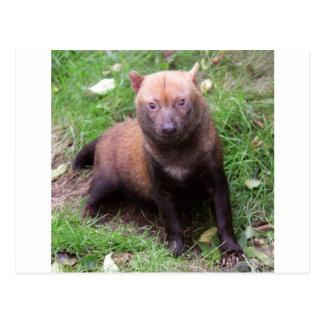 Wild Bush Dog Post Card