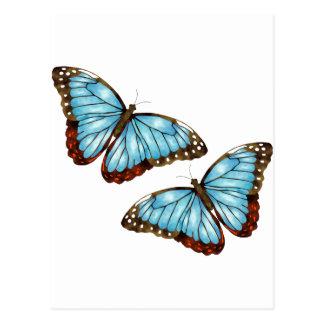 Wild Butterflies Postcard