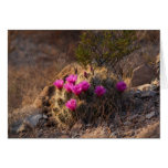Wild Cactus in bloom (Birthday Card) Card