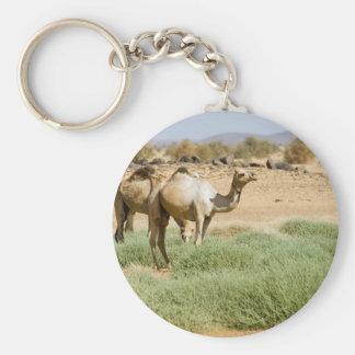 Wild Camels Keychains