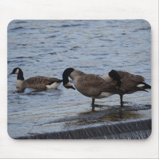 Wild Canada Geese Mouse Pad