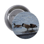 Wild Canada Geese Pins