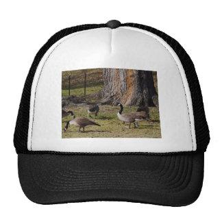 Wild Canada Geese Trucker Hat