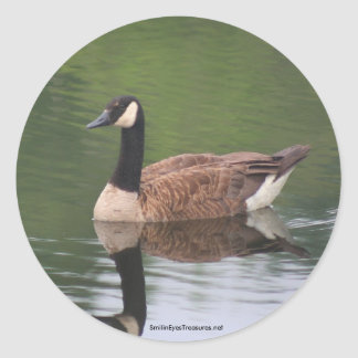 Wild Canadian Goose Nature Photo Sticker Label