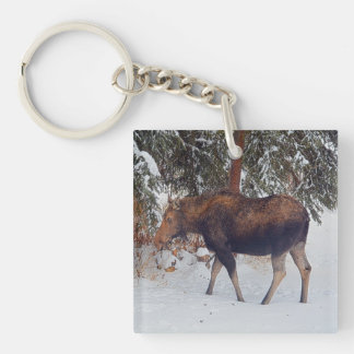 Wild Canadian Moose Cow in Winter Snow V Keychain