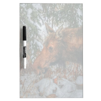 Wild Canadian Moose Grazing in Winter Forest Dry-Erase Board