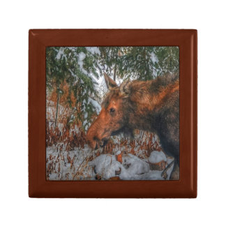 Wild Canadian Moose Grazing in Winter Forest Gift Box
