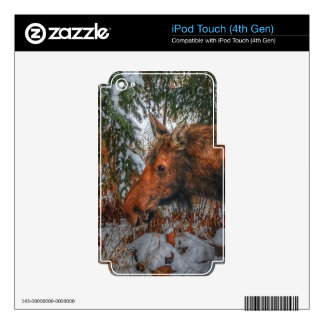 Wild Canadian Moose Grazing in Winter Forest iPod Touch 4G Skin