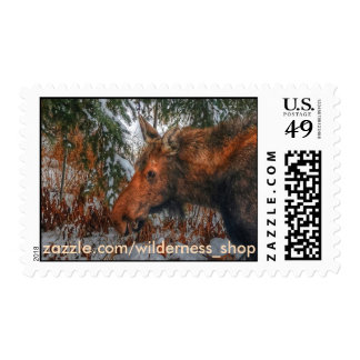Wild Canadian Moose Grazing in Winter Forest Postage Stamp