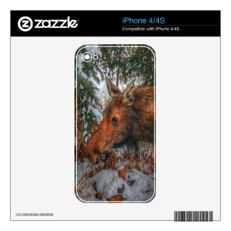 Wild Canadian Moose Grazing in Winter Forest Skin For iPhone 4S