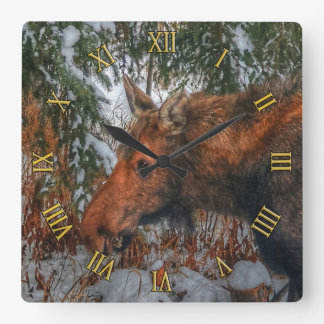 Wild Canadian Moose Grazing in Winter Forest Square Wall Clock