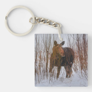 Wild Canadian Moose Grazing in Winter Marsh Single-Sided Square Acrylic Keychain