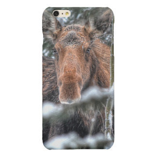 Wild Canadian Moose in Winter Forest Glossy iPhone 6 Plus Case