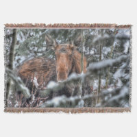 Wild Canadian Moose in Winter Forest Throw Blanket