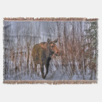 Wild Canadian Moose in Winter Snow I Throw