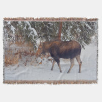 Wild Canadian Moose in Winter Snow IV Throw Blanket