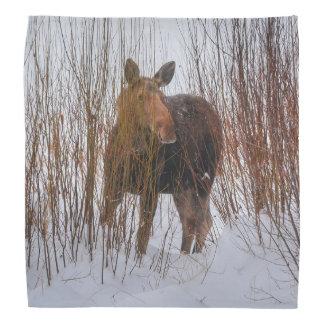 Wild Canadian Moose in Winter Snow VI Bandana