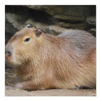 """Wild Capybara Invitations 5.25"""" Square Invitation Card"""