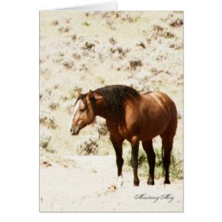 Wild Card~ Honor, Stallion of Steens