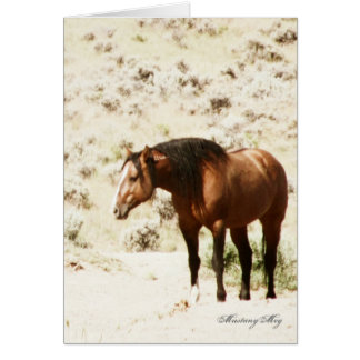 Wild Card~ Honor, Stallion of Steens Card