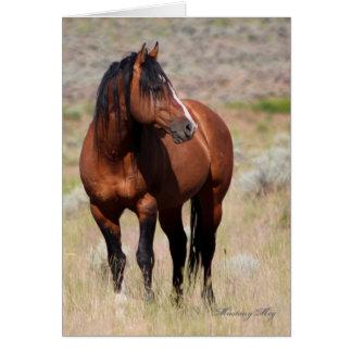 Wild Card~ Honor, Wild Stallion of Steens Card