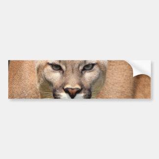 Wild Cat, Animals Purr, Cougar Bumper Sticker
