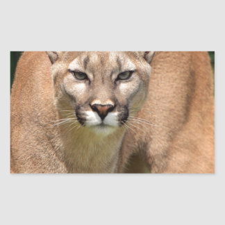 Wild Cat, Animals Purr, Cougar Rectangular Stickers