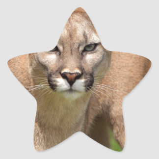 Wild Cat Animals Purr Cougar Sticker