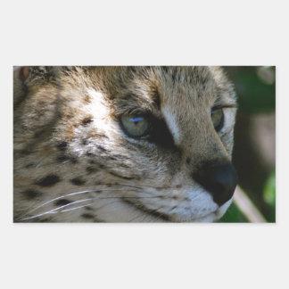 Wild cat head rectangle stickers