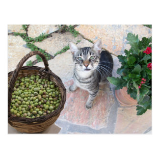 Wild Cat Kitten Giannino With Olive Chest Postcard