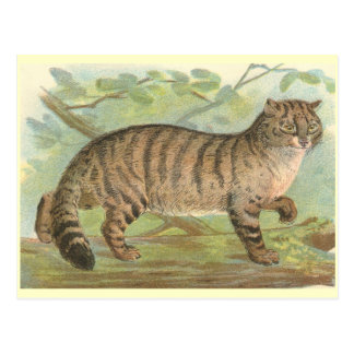 Wild Cat Postcard
