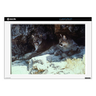 """WILD CAT DECAL FOR 17"""" LAPTOP"""