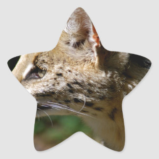 Wild cat star sticker