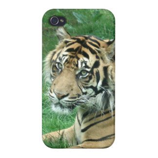 Wild Cat Sumatra Tiger Close Up On iPhone 4 Case
